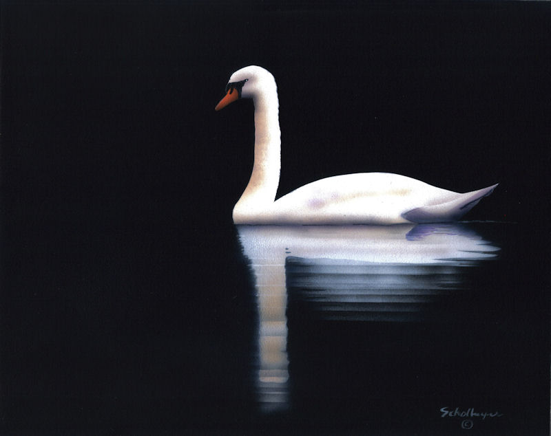 Nocturnal Swim