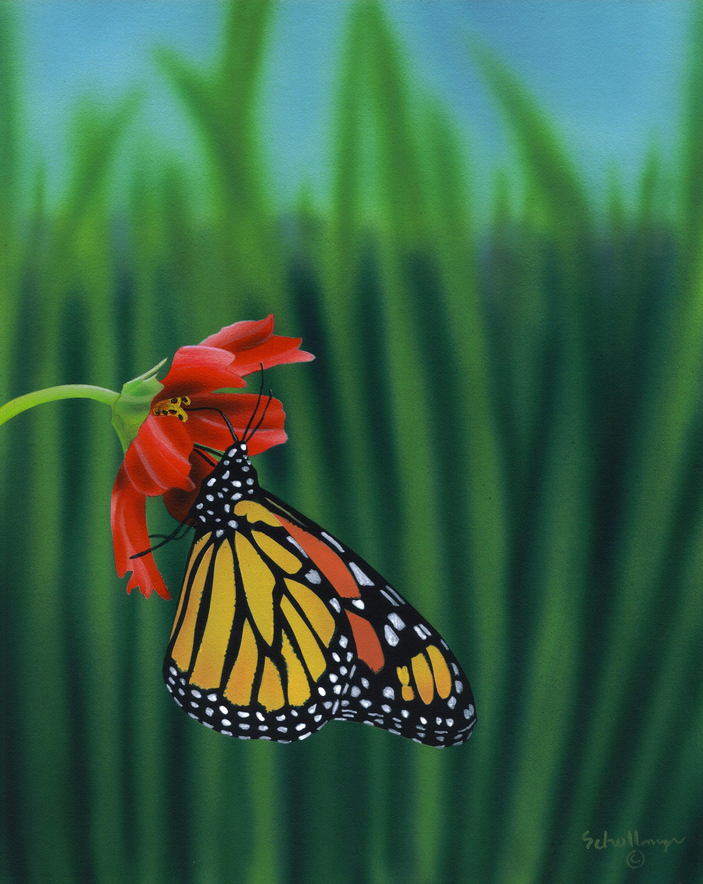 Butterfly Breaktime