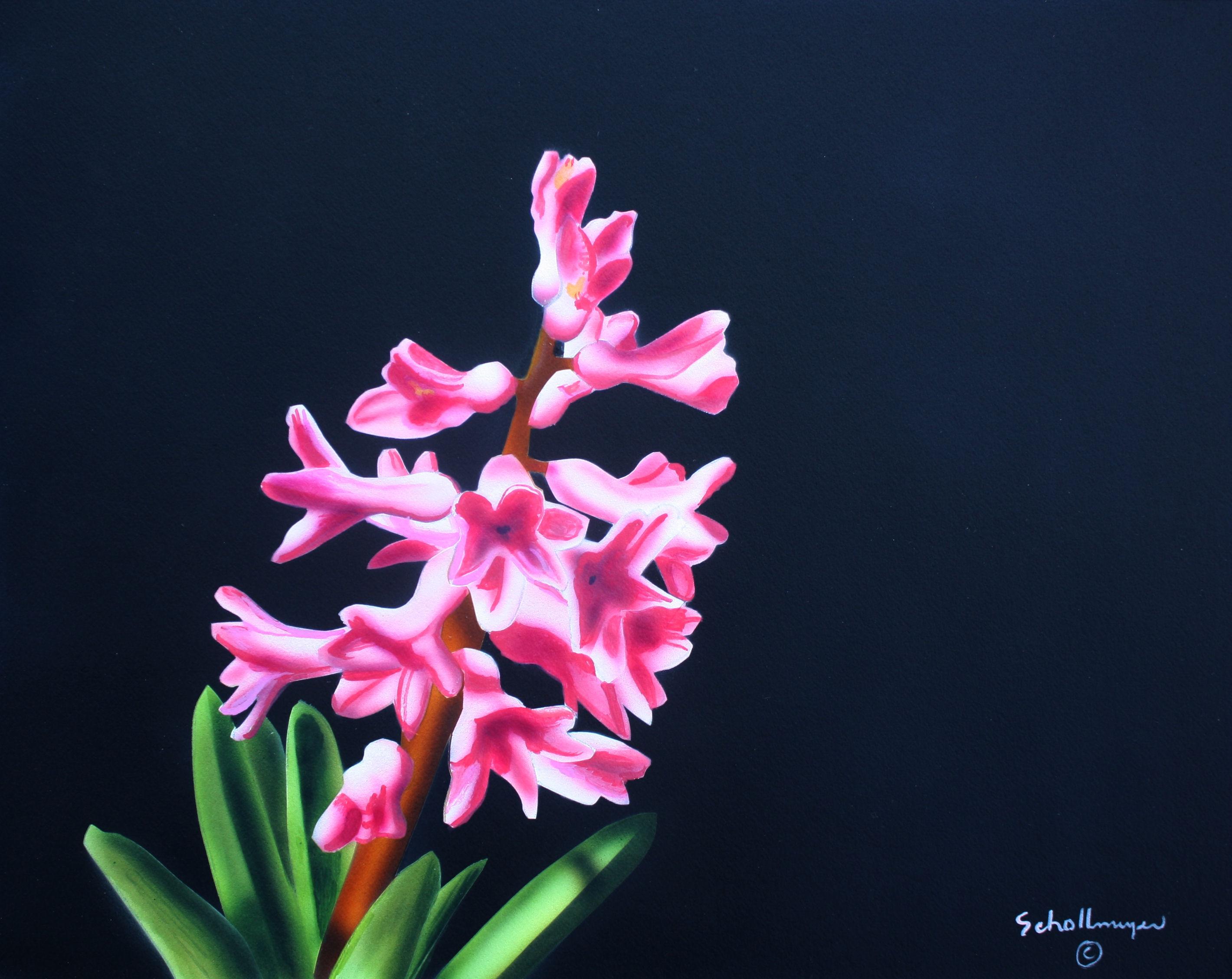Early Hyacinth