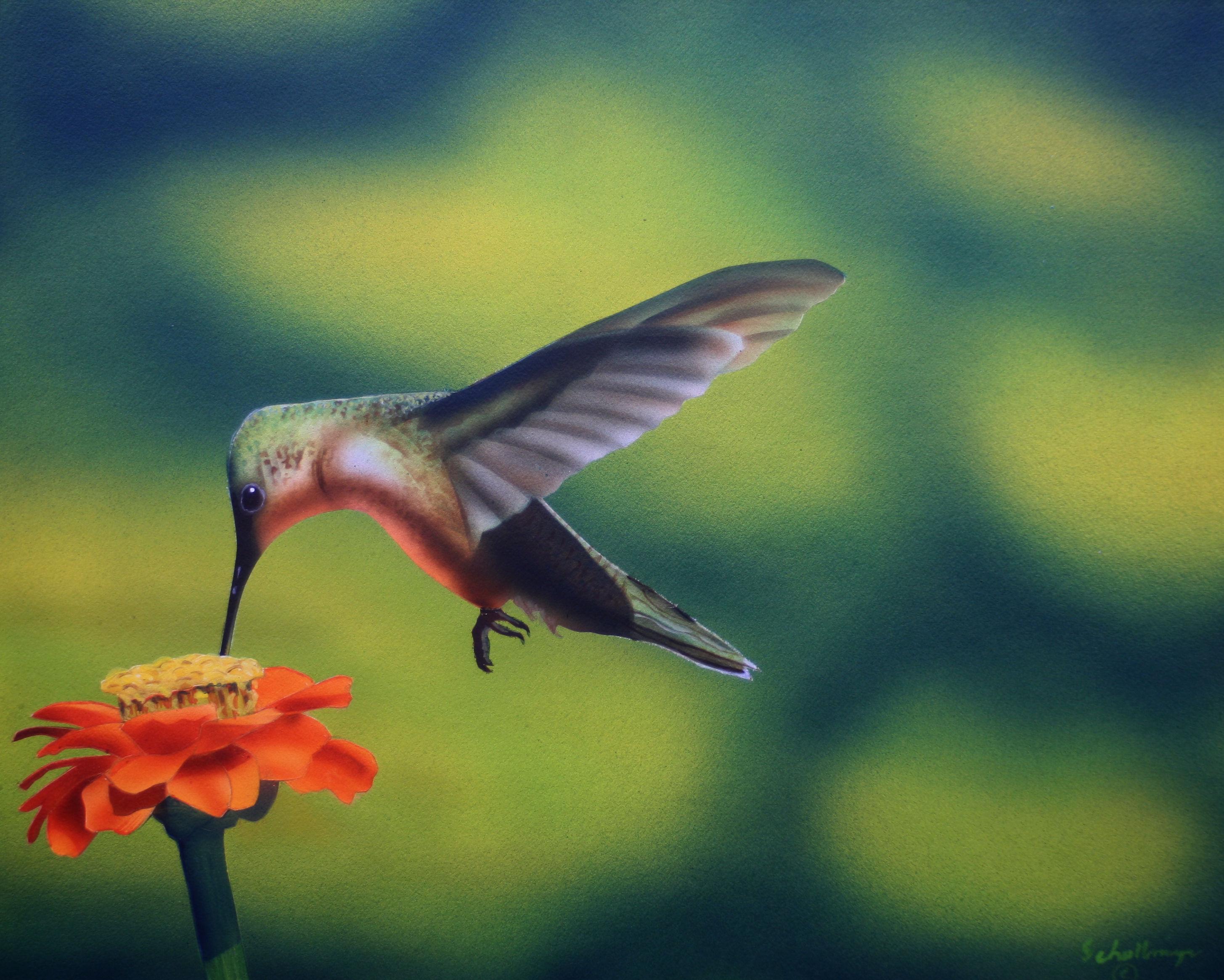 Hummingbird & Zinnia