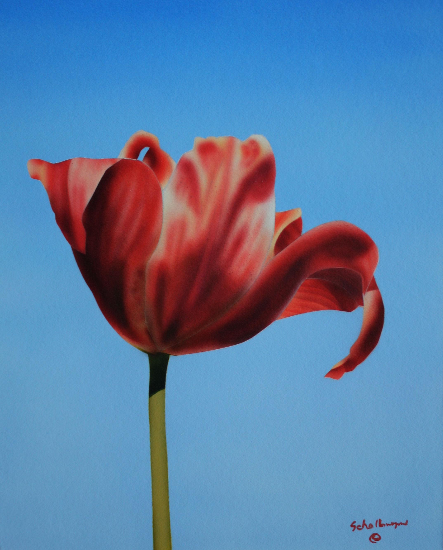 Morningside Tulip