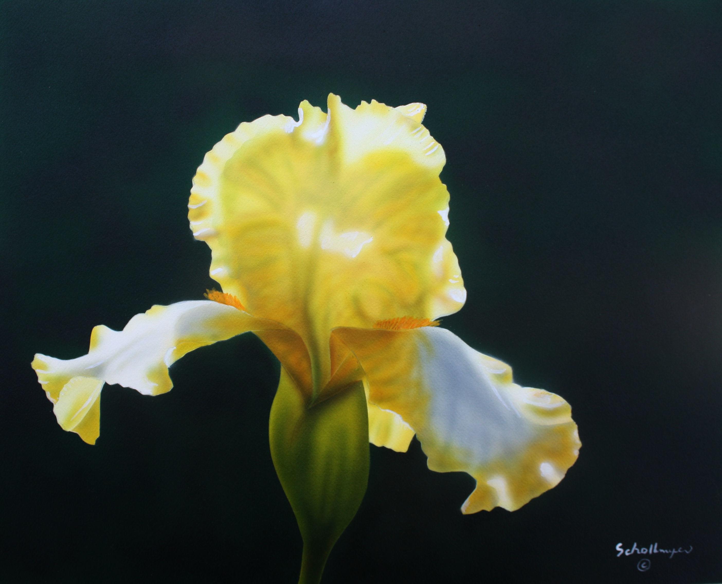 Phaedra\'s Iris