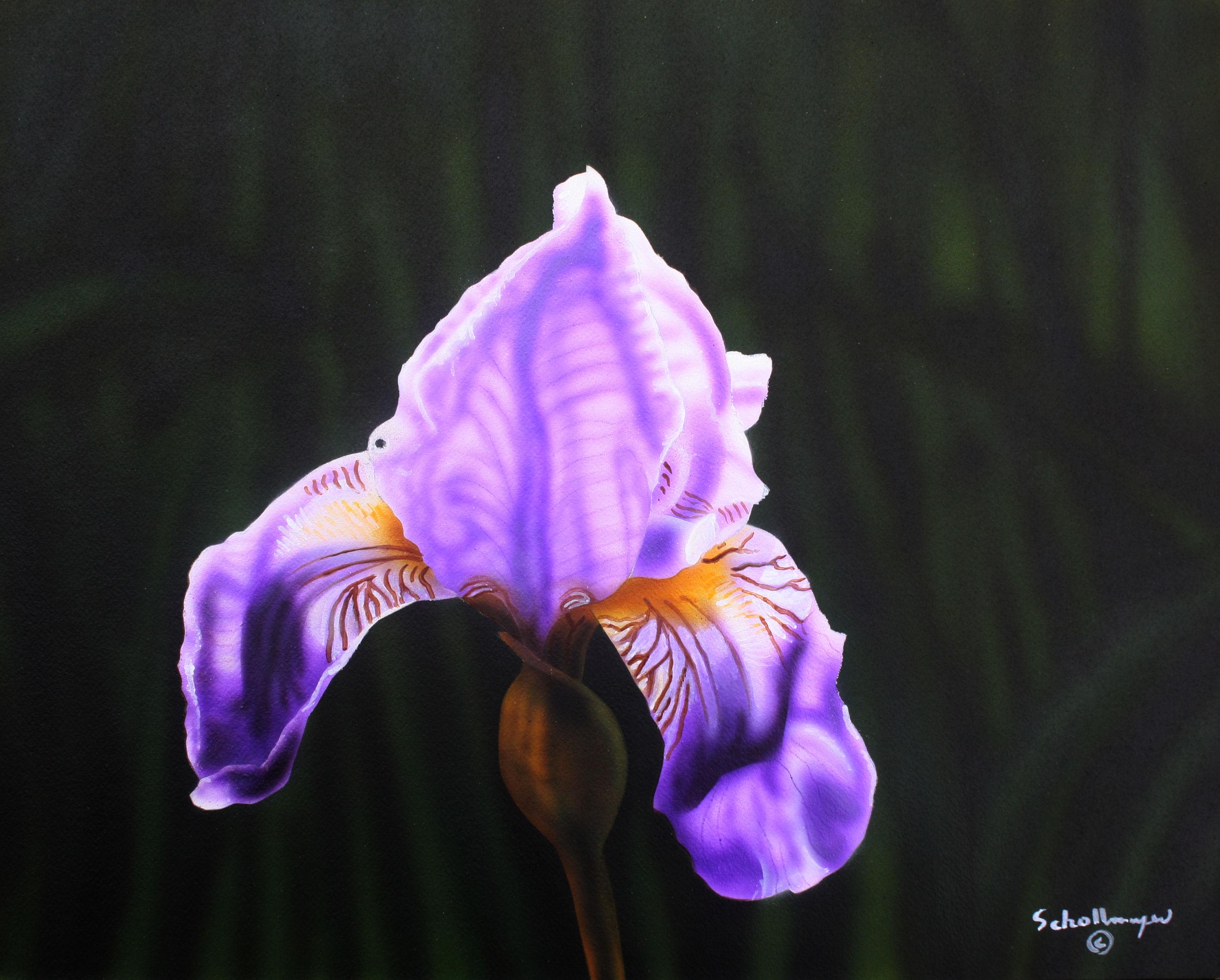 Purple Majesty