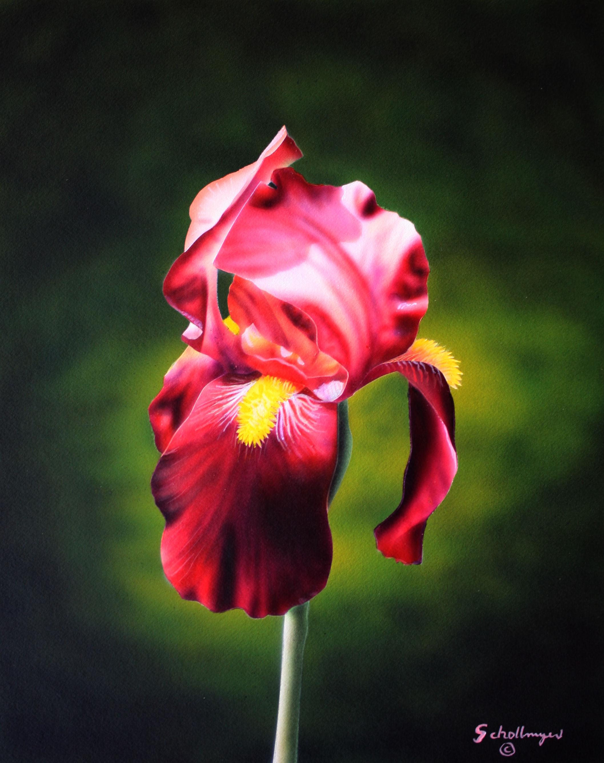 Ruby Iris
