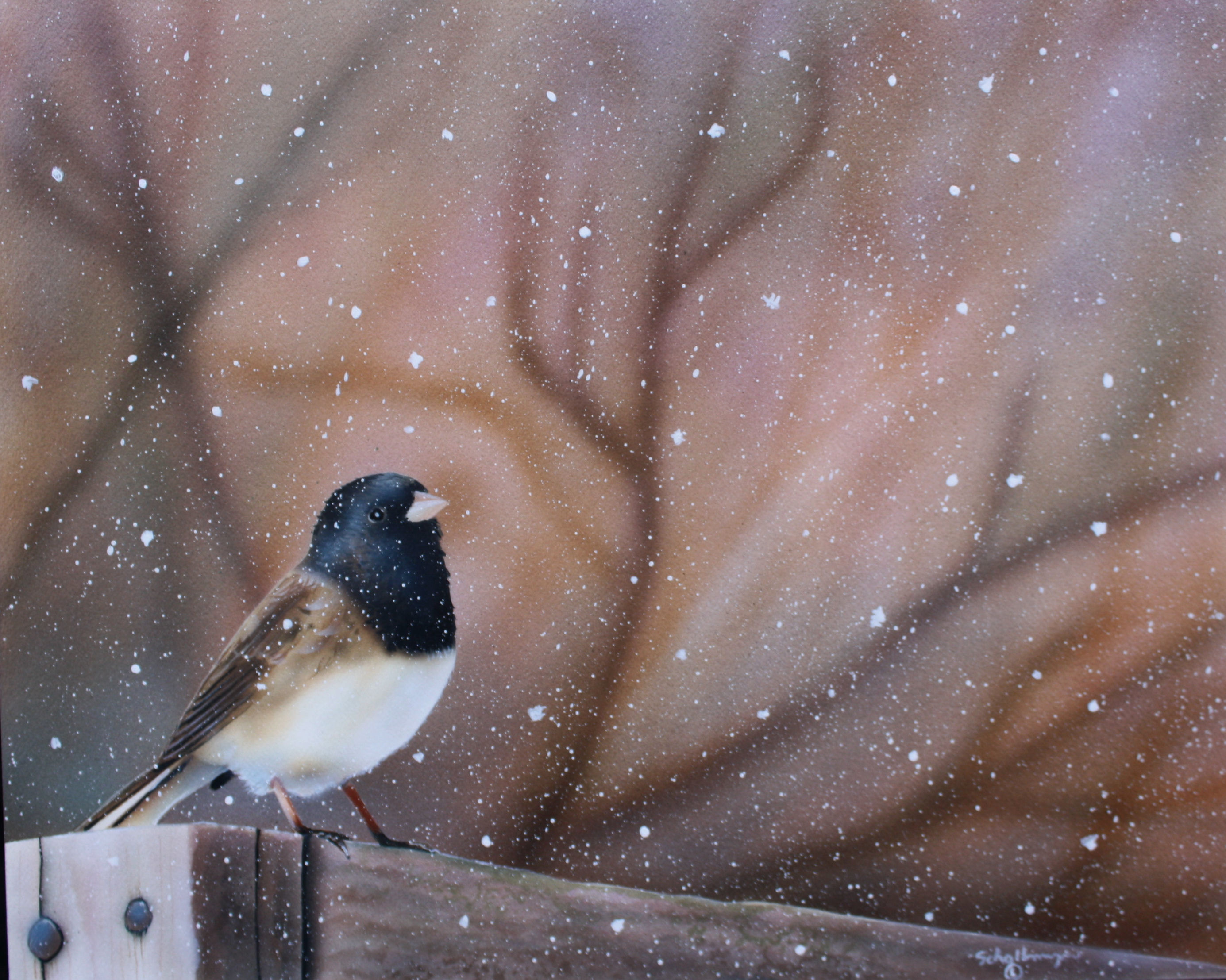 Solemn Snowbird
