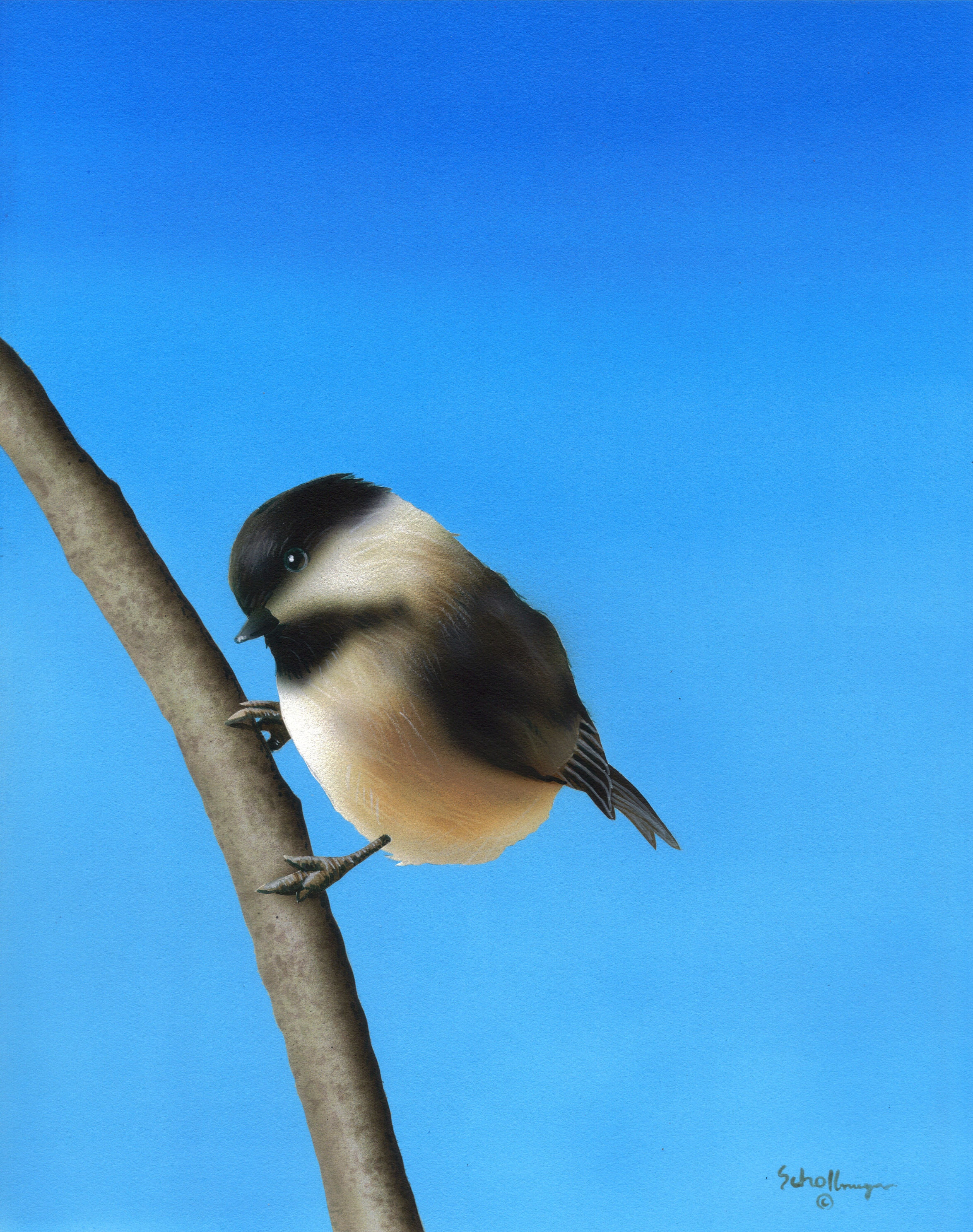 Springtime Perch