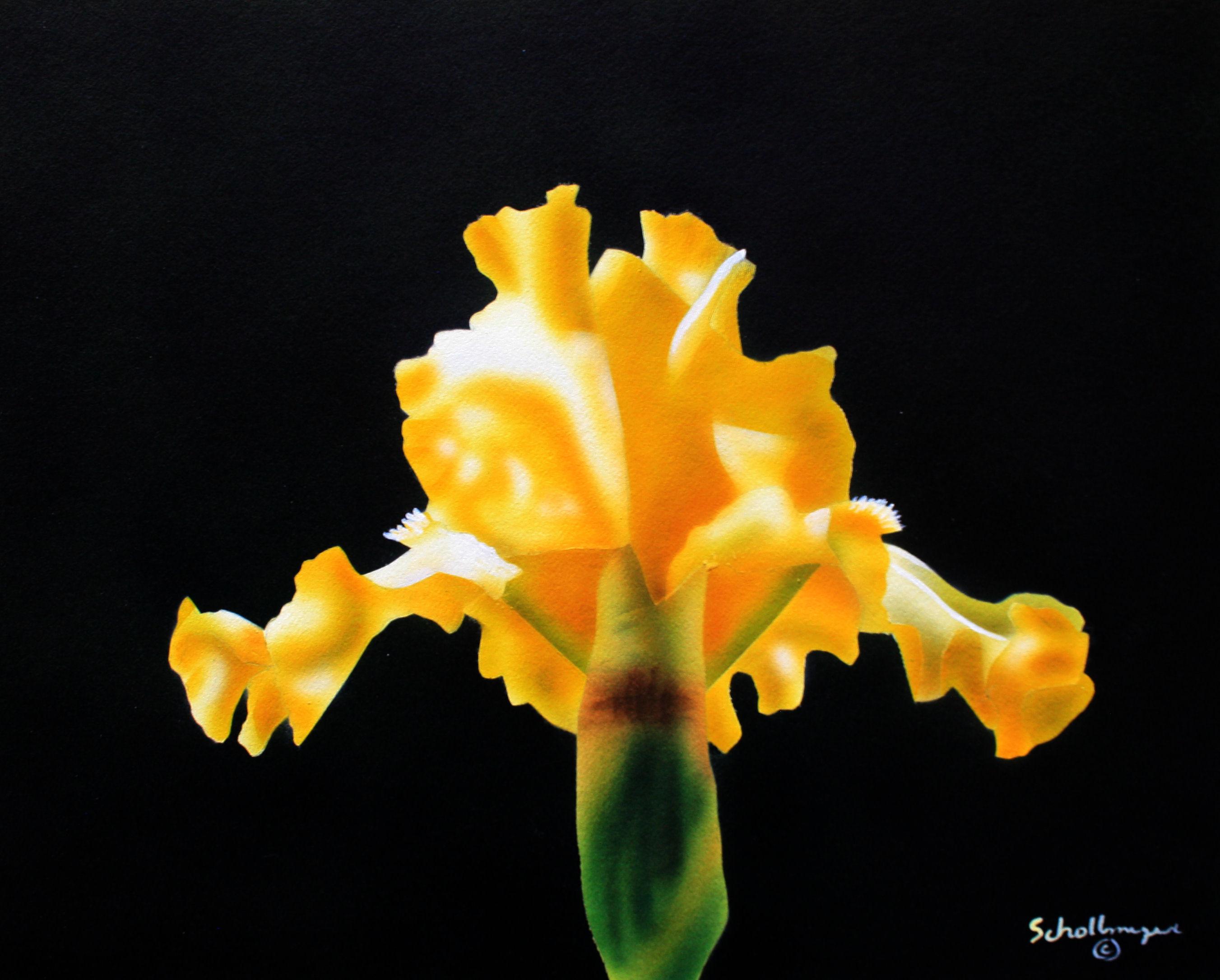Summer Yellow Iris