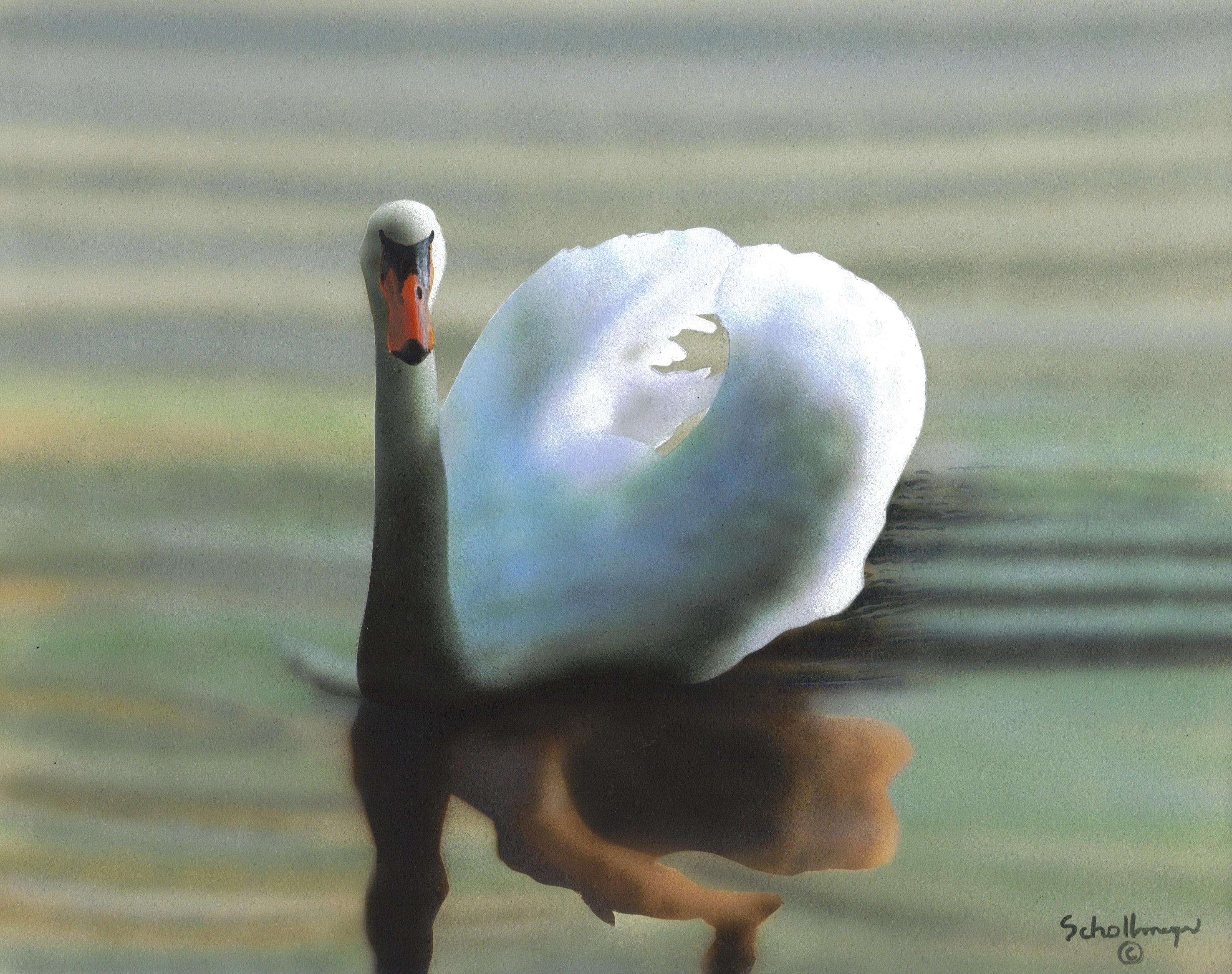 Swan (Late Evening Light)