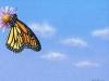 Blue Sky & Butterfly