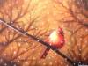 Cardinal with Sunlight