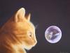 In a Cat\'s Eye
