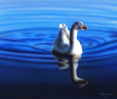 PeacefulSwim